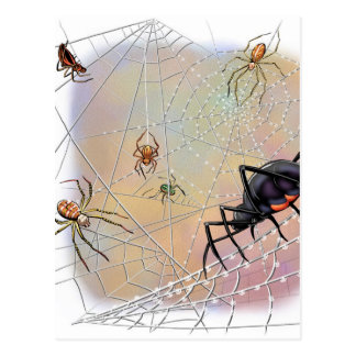 Spiders Postcard