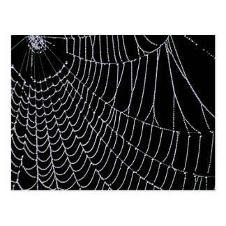 Spider's Web | Postcard