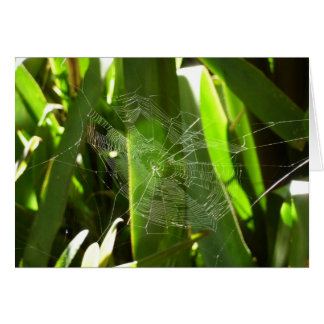 Spiderweb in Tropical Leaves Green Nature Card