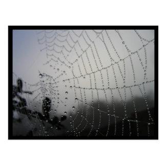 Spiderweb Post Card