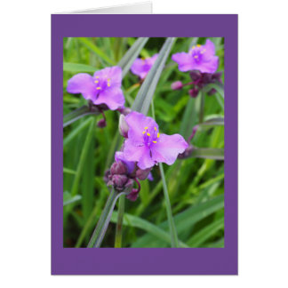 Spiderwort Blank Note Card