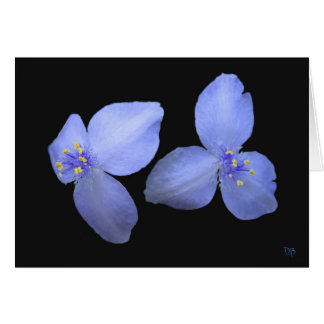 Spiderwort Flower Blank Greeting Cards