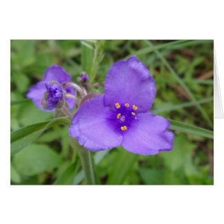 Spiderwort Purple Wildflower Card