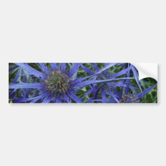 SPIKY BLUE SEA HOLLY FLOWER Bumper Sticker