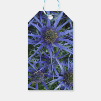 SPIKY BLUE SEA HOLLY FLOWER Gift tag Pack Of Gift Tags