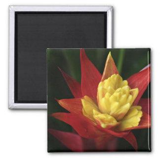 Spiky Flower magnet