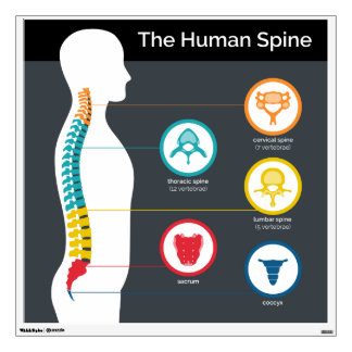 Spinal Anatomy Chart Pictorial Chiropractic Wall Decal