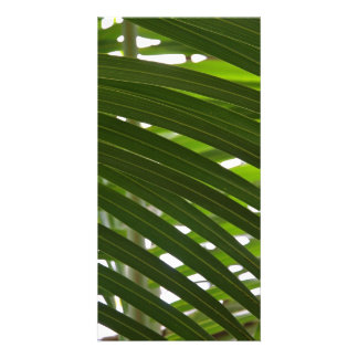 Spindle Palm Photocard Picture Card