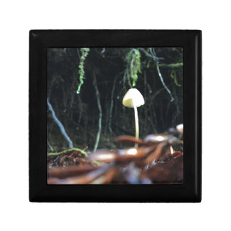 Spindly Mushroom Gift Box