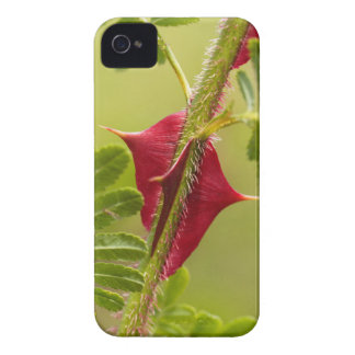 Spines of Rosa omeiensis. Case-Mate iPhone 4 Case