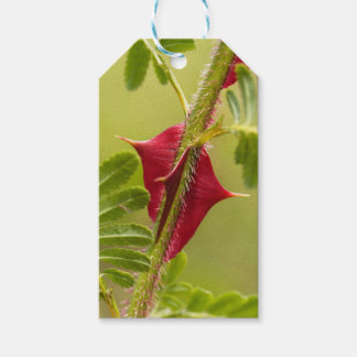 Spines of Rosa omeiensis. Gift Tags