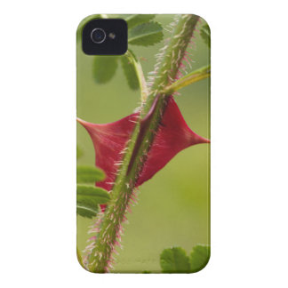 Spines of Rosa omeiensis. iPhone 4 Covers