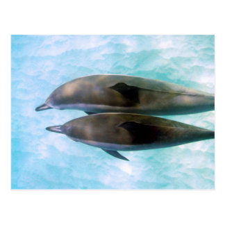 Spinner Dolphins | Oahu Hawaii Postcard