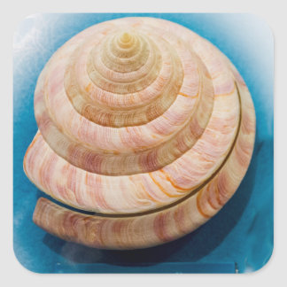 Spiral Seashell Square Sticker