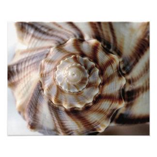 Spiral Shell Photo Print
