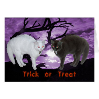 Spirit as black & white cats Card