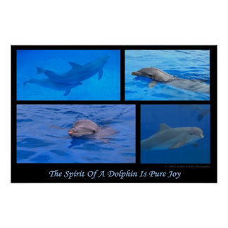 Spirit Of A Dolphin Poster