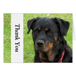 Spirit Rottweiler Thank You Note Card