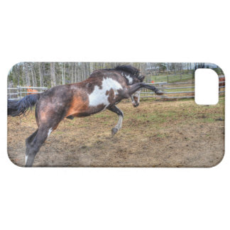 Spirited Pinto Stallion Equine Action Photo iPhone 5 Covers