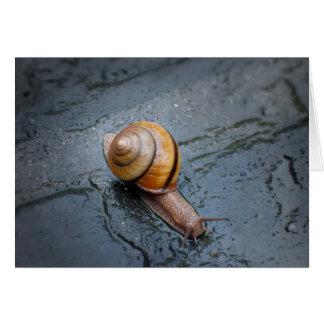 Spirited Snail on a Rainy Day Card