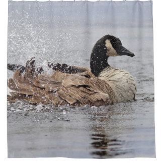 Splash - Canada Goose bathing