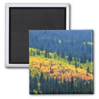 Splash of Fall Color Magnet