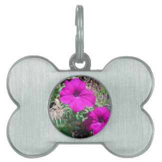 Splash of purple pet ID tag