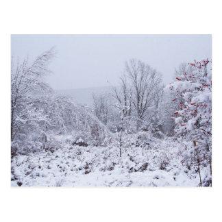 Splendour and peace of Christmas Postcard