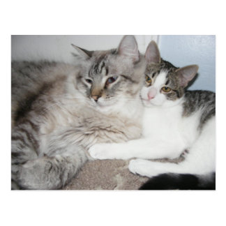 Spoiled kitties in love Card Postcard