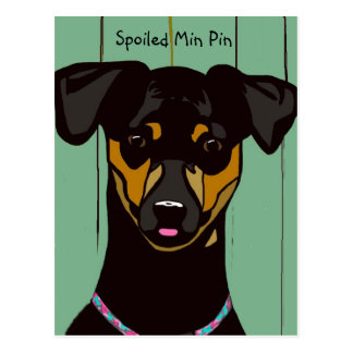 Spoiled Min Pin Postcard