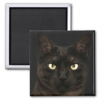 Spooky black cat magnet