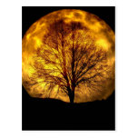 Spooky Night Moon Tree Autumn Destiny Gifts Postcards
