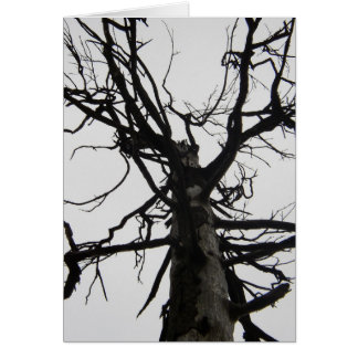 Spooky Old Tree Card