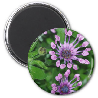 Spoon daisies fridge magnets