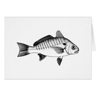 Spot Fish (line art) Card