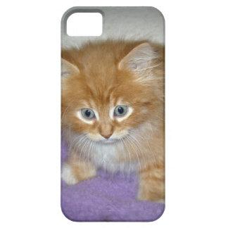 Spot on this kitten iPhone 5 case
