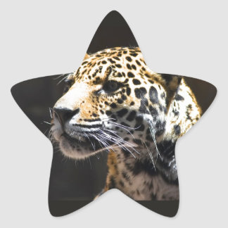 Spots and Shadow Star Sticker
