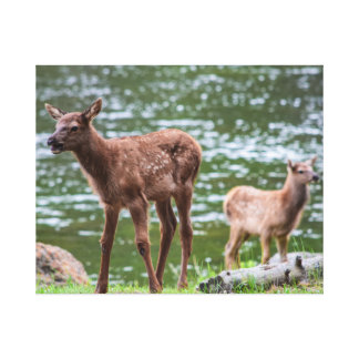 Spotted baby elk canvas print