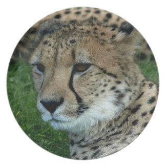 Spotted Cheetah Plate
