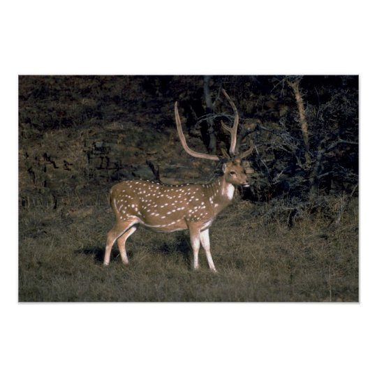 Spotted deer poster