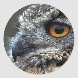 Spotted Eagle Owl round sticker