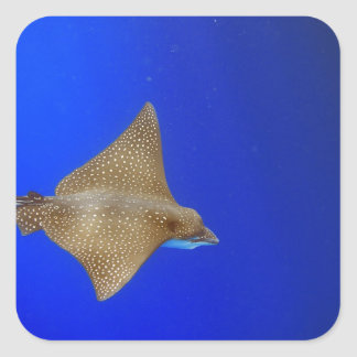 Spotted eagle ray swimming underwater paradise sticker