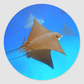 Spotted eagle rays underwater Galapagos Classic Round Sticker