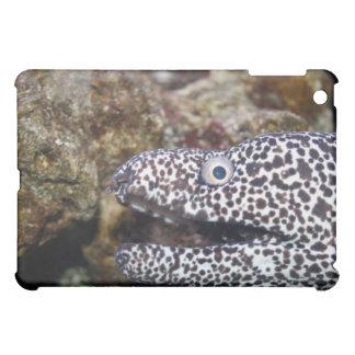 spotted eel right side aquarium animal iPad mini case