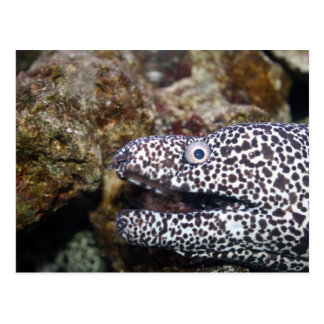 spotted eel right side aquarium animal post cards