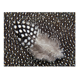 Spotted Guinea fowl feather Postcard