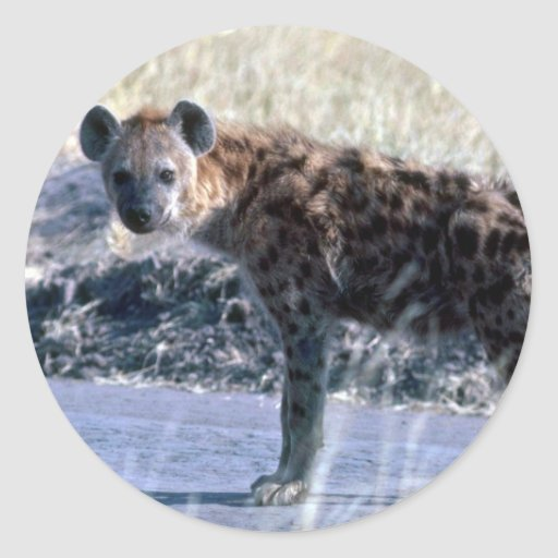 Spotted Hyaena Stickers