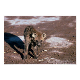 Spotted Hyaena - Young Cub Near Den Poster