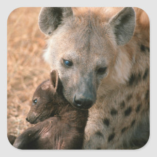 Spotted Hyena (Crocuta Crocuta) With Pup Square Sticker