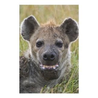 Spotted Hyena portrait, Crocuta croduta, Masai Photo Art